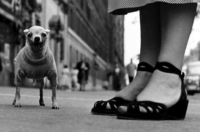 New York, 1946, Elliott Erwitt